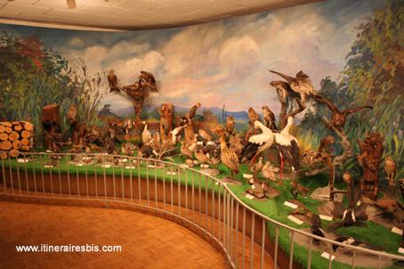 La faune Alsacienne au musée d'Histoire naturelle de Colmar