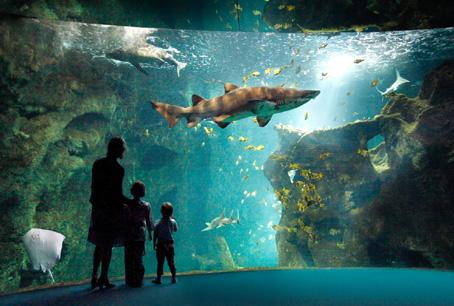 L'amphithéâtre des requins