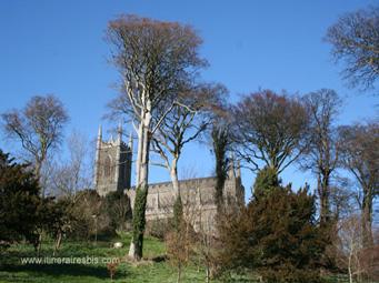 Cathédrale Saint Patrick et son musée
