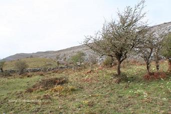 Randonnée dans le parc du Burren